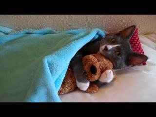 Милый котик с мишкой Тедди
